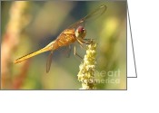 Carol Groenen Greeting Cards - Yellow Dragonfly on Yellow Reed  Greeting Card by Carol Groenen