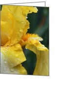 Elizabeth Rose Greeting Cards - Yellow Iris in the Rain Greeting Card by Elizabeth Rose
