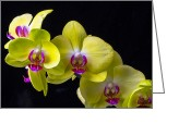 Exotic Orchid Greeting Cards - Yellow Orchids Greeting Card by Garry Gay