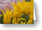 Brian Jones Greeting Cards - Yellow West Point Tulip Lily Greeting Card by Brian Jones