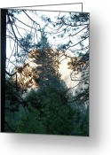 Trees Ceramics Greeting Cards - Yosemite 212 Greeting Card by Kristi  Hackney