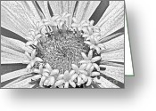 Cultivars Greeting Cards - Zinnia Digital Drawing By JFantasma Photography Greeting Card by JFantasma Photography