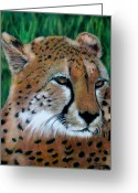 Family Pastels Greeting Cards - Cheetah Greeting Card by Carol McCarty