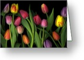 Cslanec Mixed Media Greeting Cards - Painted Tulips Greeting Card by Christian Slanec