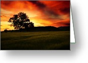 All Tree Greeting Cards - the Fire on the Sky Greeting Card by Angel  Tarantella