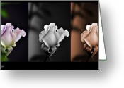 Bruster Greeting Cards - The Rose Greeting Card by Clayton Bruster