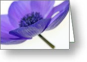 Anemone  Greeting Cards - A-Nemone Greeting Card by Rebecca Cozart
