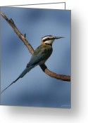 Wild-life Greeting Cards - African Bee Eater Greeting Card by Joseph G Holland