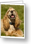 Yellow Dog Greeting Cards - All Smiles Greeting Card by Lynn Andrews