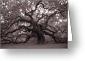 Oak Tree Greeting Cards - Angel Oak Tree Greeting Card by Dustin K Ryan