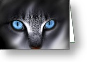 Cat Eyes Greeting Cards - Baby Blues Greeting Card by Cecil Fuselier