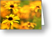 Black Eyed Susans Greeting Cards - Black Eyed Susans Greeting Card by Jim Dohms