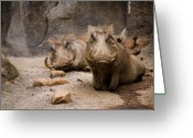 Boar Greeting Cards - Boar-d Greeting Card by Ryan Heffron