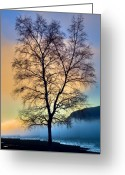 B.c Greeting Cards - Branches Greeting Card by David  Naman