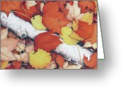 Fall Drawings Greeting Cards - Brilliant Embers Greeting Card by Amy S Turner