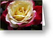 Bruster Greeting Cards - Burst Of Rose Greeting Card by Clayton Bruster