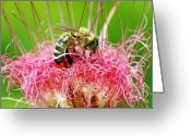Pollen Greeting Cards - Busy Bee Greeting Card by Holly Kempe