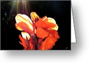 Canna Greeting Cards - Canna Lily Greeting Card by Will Borden
