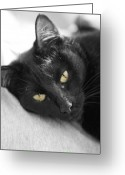 Black Cat Greeting Cards - Caspian Greeting Card by Amanda Barcon