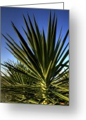 Yucca Plant Greeting Cards - Charleston Yucca Greeting Card by Dustin K Ryan