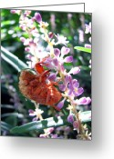 Cicada Greeting Cards - Cicada Shell Greeting Card by Todd A Blanchard
