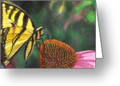 Echinacea Greeting Cards - Cone Flower Greeting Card by Catherine G McElroy
