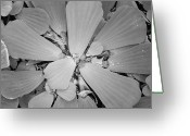 Conservatory Photo Greeting Cards - Conservatory Nature in Black and White 1 Greeting Card by Carol Groenen