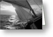 Sailboat Greeting Cards - Coquette Sailing Greeting Card by Dustin K Ryan