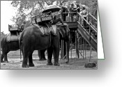 Elephant Ride Greeting Cards - Elephant Ride Greeting Card by Miranda  Miranda