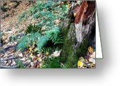 Anna Villarreal Garbis Greeting Cards - Fern and Moss I Greeting Card by Anna Villarreal Garbis