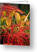 Tropical Gardens Greeting Cards - Firecracker Bromeliad Greeting Card by Stephen Mack