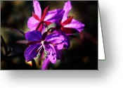 Fireweed Greeting Cards - Fireweed Greeting Card by Anthony Jones