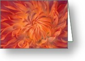 Dahlia Greeting Cards - Flame Greeting Card by Photodream Art