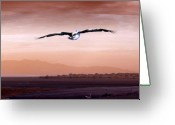Pelican Greeting Cards - Flight Greeting Card by Holly Kempe