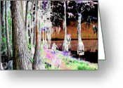 Florida Swamp Greeting Cards - Florida Swamp Greeting Card by Peter  McIntosh