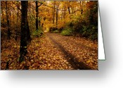 Fall Greeting Cards - Forest Trail Greeting Card by Scott Hovind