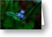 Tiny Flowers Greeting Cards - Forget Me Not  Greeting Card by Marilynne Bull