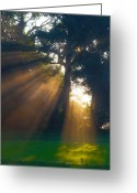 Golf Green Greeting Cards - Four Green Sunrise Greeting Card by Edwin Voorhees