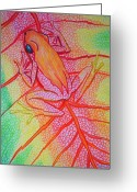 Colorful Drawings Greeting Cards - Frog on leaf Greeting Card by Nick Gustafson