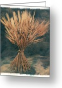 Feed Greeting Cards - Grain Greeting Card by Jim Wright