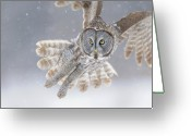 Eyes Greeting Cards - Great Grey Owl in Snowstorm Greeting Card by Scott  Linstead