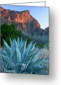 National Greeting Cards - Green Gulch Agave Greeting Card by Eric Foltz