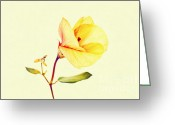 Photos Of Autumn Greeting Cards -  A Yellow Flower Greeting Card by Benny  Woodoo