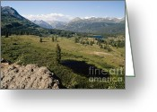 Southern Rocky Mountains Greeting Cards -  Alpine Meadow in Colorado Greeting Card by George Oze