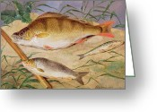 Reptiles Painting Greeting Cards -  An Anglers Catch of Coarse Fish Greeting Card by D Wolstenholme