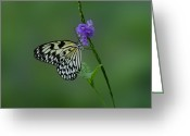 Sandy Keeton Greeting Cards -  Butterfly on Flower  Greeting Card by Sandy Keeton