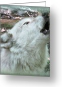 Photograph Of Alpha Wolf Greeting Cards -  Connection Greeting Card by Debra     Vatalaro
