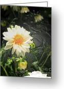 Pretty Flowers Greeting Cards -  Flower -Plastic Wrap Greeting Card by Cheryl Young