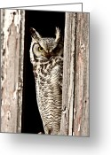 Perched Birds Greeting Cards -  Great Horned Owl perched in barn window Greeting Card by Mark Duffy