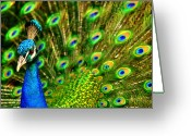 Peacock Greeting Cards -  His Majesty Greeting Card by Trudi Simmonds